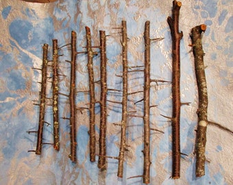 Blackthorn Wood, Wand Carving Wood, Wild Plum Wood, Wood Craft Supply, Magical Wand Wood, Wiccan Druid Pagan Ritual Wood, Sloe Blackthorn