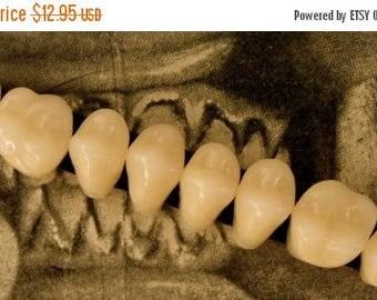 ONSALE Got Molars - Composite Teeth
