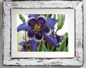 Columbine Flower Printabl...