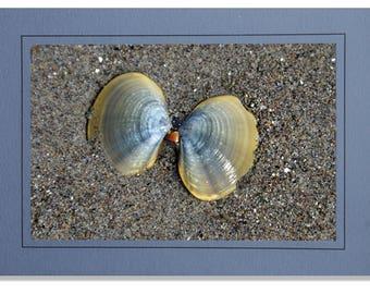 Seashell Cards - Clam Shell Cards - Beach Cards - Sea Shell Cards - Cards of Seashells - Sandy Beach Cards - Coastal Cards