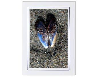 Seashell Cards - Muscle Shell Cards - Beach Cards - Sea Shell Cards - Cards of Seashells - Sandy Beach Cards - Coastal Cards
