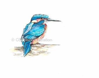 Kingfisher  - Fine Art Print