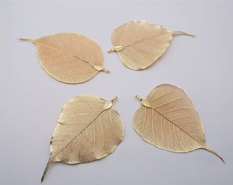Nature Tree Leaf Charm - Champagne gold, Vein Leaves, Gold Leaf, Real Nature Leaf Pendant, Metal Plated Natural Leaf, Filigree Leaf Charm