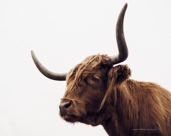 Scottish Highland Cow, Fine Art Photography Print