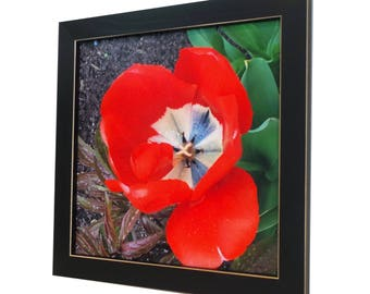 Magnetic Board - Magnet Board - Dry Erase Board - Framed Bulletin Board - Office Wall Decor - Red Tulip Photo Design - includes magnets