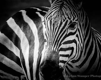 Zebra,Canvas Art,Africa,Black And White,Stripes,Large Wall Art