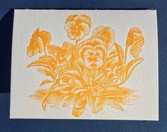 Orange Pansy Plant