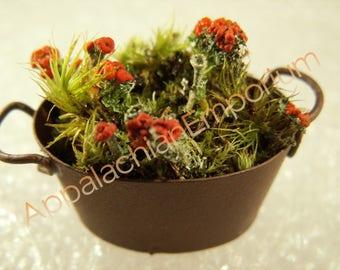 """Fairy Garden Decor """"Flower"""" Pot w/ Live British Soldier Lichen Moss Miniature"""