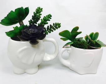 Ceramic Succulent Planter   Elephant   Succulent Planter   Trunk Up   from my Charleston, SC Studio