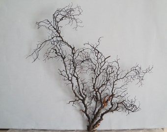 "16"" x 14.5"" Large Natural Black  Color Gorgonian Sea Fan Fish Tank Seashells Reef Coral"