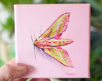 Elephant Hawk Moth Oil Painting Original 4x4 inches