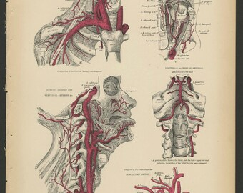 3 Vintage 1880 Human Anatomy Lithograph Print Head, Neck, Arteries, Veins, Lymphatics