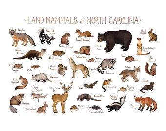 North Carolina Land Mammals Field Guide Art Print  / Animals of North Carolina / Watercolor Painting / Nature Art Print / Wildlife Poster