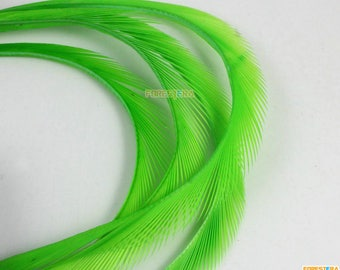 50 Pieces Green Feather 10-16cm (YM436)