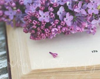 Vintage, Book, Lilac, Purple, Farmhouse, Office, Minimalist, Natural, Modern, Home Decor, Original Fine Art Photograph, Square Print