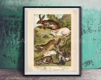 Summer Sale Poster Print Rabbits Lapin Bunny Natural History Antique Look Stunning Color 8x10 to 24x30 Johnson