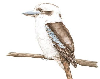 Summer Sale Archival print of a Kookaburra, from an original watercolour painting.