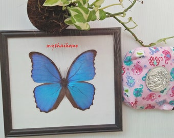 Rare Blue Morpho Real Butterfly Framed Frame Display Insect Mounted Didius See Glass Peruvian Taxidermy Set Entomology Gift Asian Wall Decor