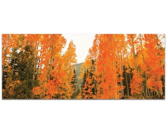 Landscape Photography 'Aspen Fire' by Meirav Levy - Autumn Nature Art Contemporary Aspen Trees Decor on Metal or Plexiglass