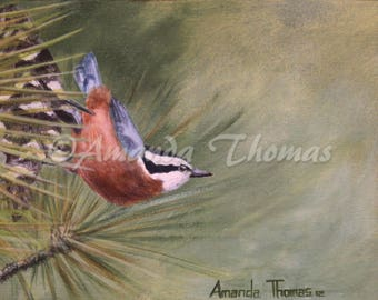The Lookout:Red-Breasted Nuthatch - Print from original acrylic painting