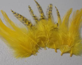 Craft Feathers - Yellow Craft Feathers - Grizzly and Solid Rooster Hackle Craft Feathers 2-4 iches qty 20