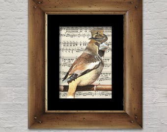 Music Print: Songbird - Steampunk Hawfinch in Top Hat
