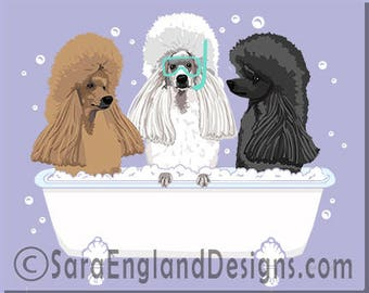 Spa Day - Poodle-Mix-Show