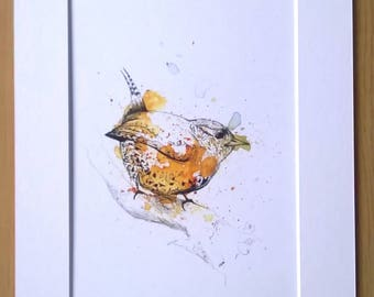 Wren - A5 Wildlife Print in Colour-burst with Intricate Detailing in Fineliner and Watercolour in Mount