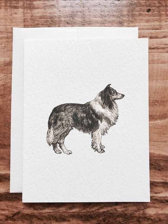 country farm collie dog notecards 8 count