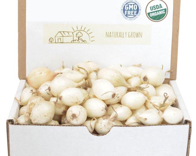 White Onion Sets Organic   Onion Bulbs White Ebenezer Onion 1 Pound Non-GMO SPRING SHIPPING