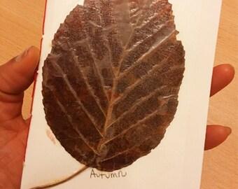 Autumn leaf sketchbook