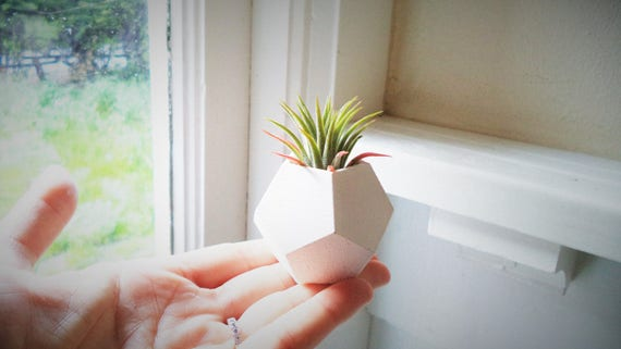 Geometric dodecahedron mini planter, air plant holder, dodecahedron planter