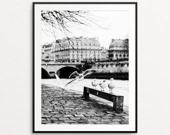 Pont Neuf Photo, Paris Photography, Paris Print, Paris Decor, Paris Wall Art, Seine River, Paris Large Wall Art Print, Paris Seagulls