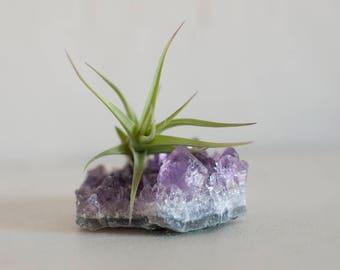 Air Plant Terrarium, Amethyst Crystal, Crystal Garden, Office Desk Accessories, Mini Plants, Mom Gift, Boho Decor, Crystal Planter, AirPlant