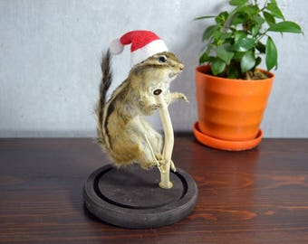 Taxidermy Chipmunk Squirrel Hat Can Removed  Christmas Guy