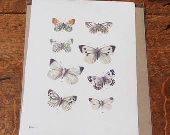 Vintage Butterfly Print circa 1903