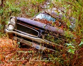 1967 Pontiac GTO leaning in the Woods Photograph