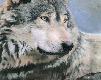Friduwulf (peaceful wolf)