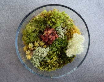 Fresh Live Moss Variety Pack! (Terrarium Assortment Pack)