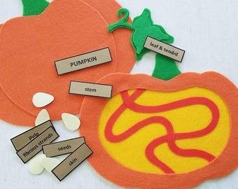 Parts of a PUMPKIN - Felt Board Learning Set, Felt Board Stories, Felt Board Pieces, Circle Time, Educational Toys