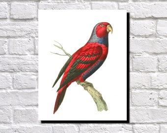 Blue Necked Lory Print, Birds Poster, Wildlife Art, Vintage Birds Illustration, Ornithology Fine Art Print,  Ornithologist Gift, 0546