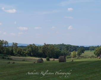 Limited Edition Color/Loudoun County/Virginia Countryside: Sweet Virginia Verdant Countryside 8x12 Print