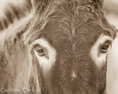 """Wild Burro print,Wild Horse Photo, Wild Horse and Wild Burro Photograph. Donkey photograph.""""Eyes"""""""