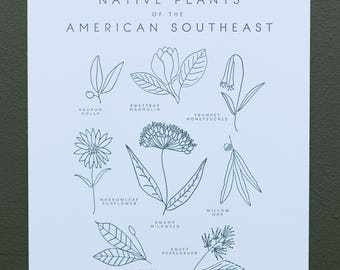 Native Plants of the American Southeast Botanical 8x10 Letterpress Art Print