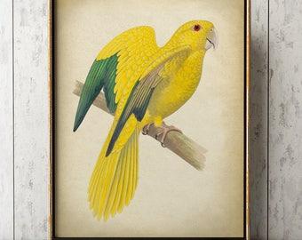 YELLOW PARROT Print, Tropical Parrot Poster, Exotic Bird Print, Parrot Illustration, Wall Art.