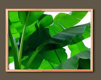 Banana Leaf, Banana Leaf Print Art, Tropical Leaf Art Print, Banana Leaf Printable, Botanical Leaf Wall Art, Tropical Leaf Poster, Plant Art