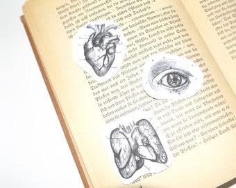 Vintage Anatomy stickers black/white