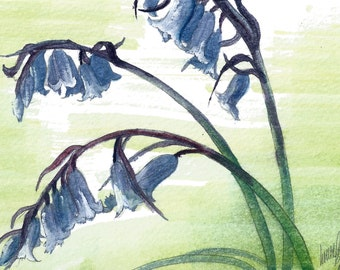 Bluebells Postcard Painting