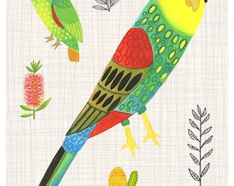 Paradise parrot 8 x 10 print - australian natives, flowers & parrots, kids print, children's art, Australiana