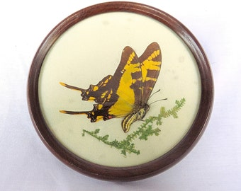 Vintage Framed Real Butterfly ''Papilio'' under Glass, Round Wooden Frame